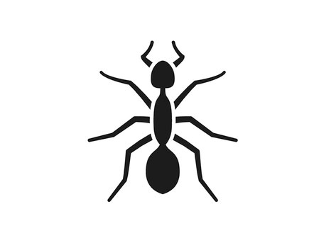 Ant pest control, Rochester NY