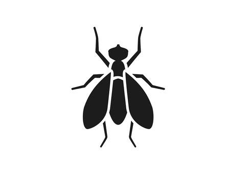 Fly exterminators, Rochester, NY
