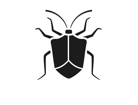 Stink Bug pest control, Rochester, NY